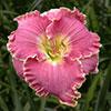 Купить лилейник Розовый AUDREY ELAINE MCCULLOUGH