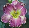 Купить лилейник Фиолетовый СИРЕНЕВЫЙ ТУМАН (LILAC FOG)