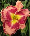 Купить лилейник Розовый GINORMOUS