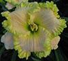 Купить лилейник ANGELS GATHER AROUND Larry Grace