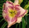 Купить лилейник Розовый INNER DEPTH