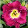 Купить лилейник Фиолетовый RITA SUE