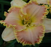 Купить лилейник Розовый FLAVORED PEACH