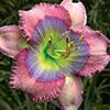 Купить лилейник Розовый BLUE PEARL