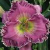 Купить лилейник Фиолетовый APRIL SMITH