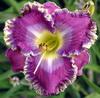 Купить лилейник Фиолетовый DANNY STEVE MITCHELL